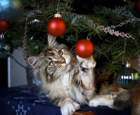 """Aktion """"Weihnacht"""""""